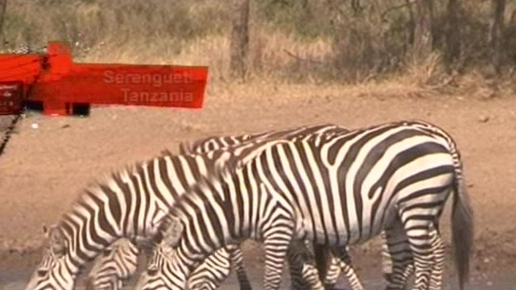 Tanzania: El safari, el mayor reclamo turístico