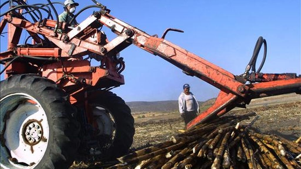 Entre las 220 empresas explotadoras de mano de obra esclava figuran principalmente haciendas, ingenios azucareros, además de carbonerías, madereras, constructoras y de la industria textil, entre otras. EFE/Archivo