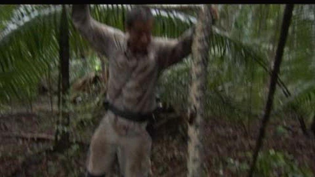 Belice: El último superviviente apresa una boa constrictor