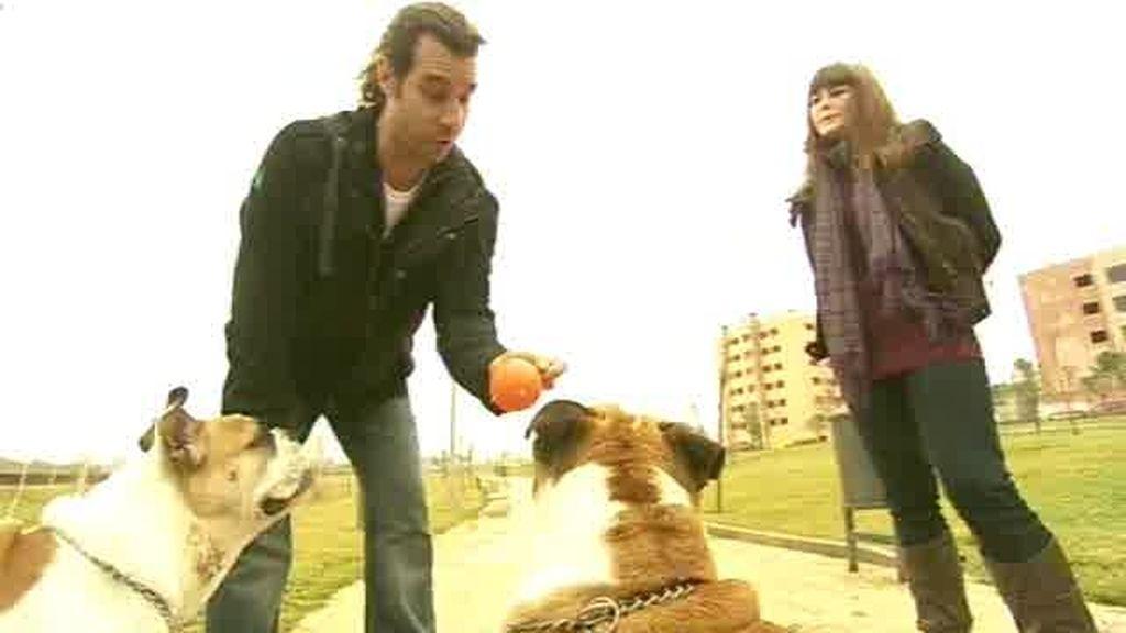 Avance: Un juguete es una presa para un perro