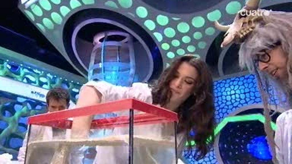 Flipy explica cómo coger una llave dentro del agua sin mojarse a Rachel Weisz y Alejandro Amenabar