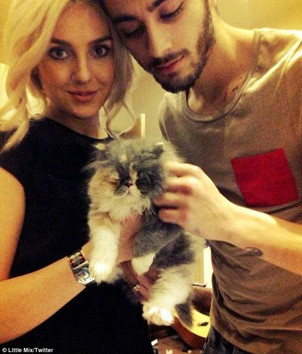 Perrie Edwards y Zayn Malik de 'One Direction'  tienen un… ¡Gato!