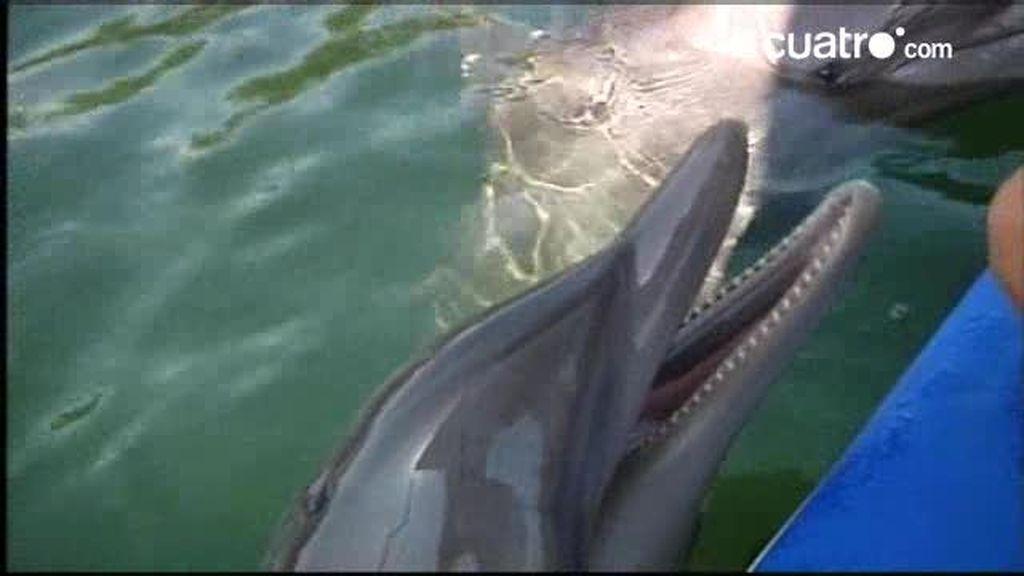 Fauna Viajera: Espectáculo de delfines