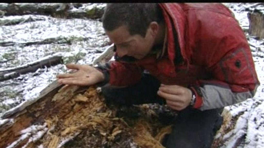 Patagonia: Larvas y lombrices, el desayuno del último superviviente