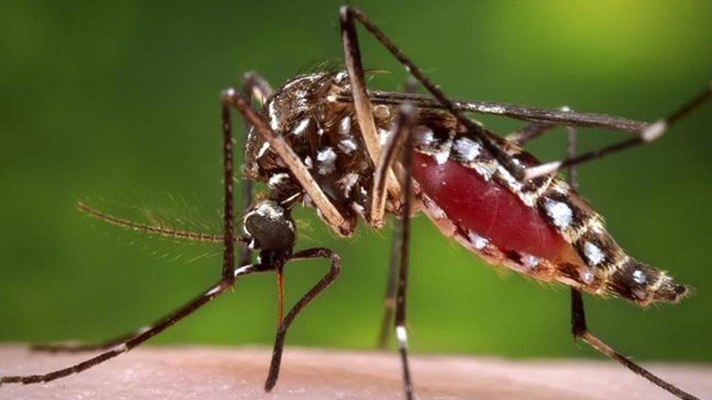 La vacuna contra el virus chikungunya supera los primeros controles
