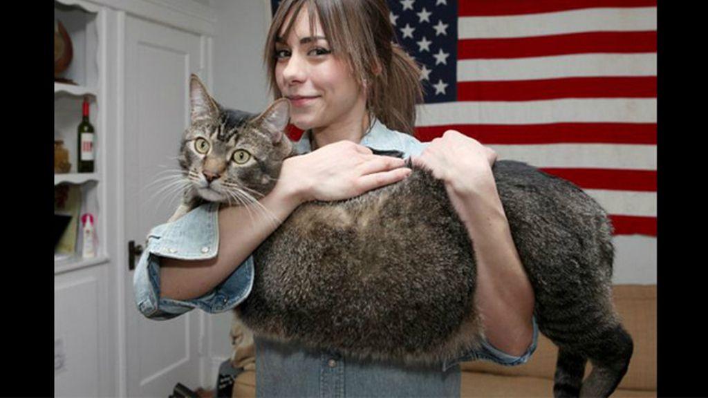 Pickles, el gato de nuevo kilos