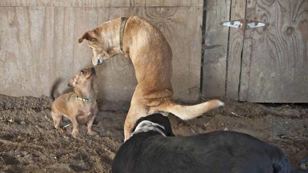 Faith el perro, es todo un orgullo nacional en Estados Unidos