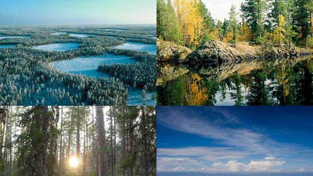 La taiga siberiana: El bosque boreal