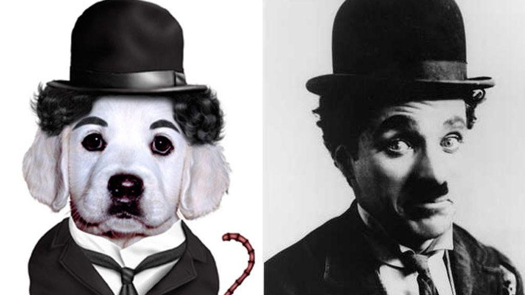 Los 'pets' se disfrazan de celebrities