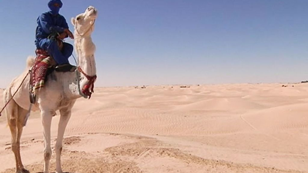 Camello y desierto