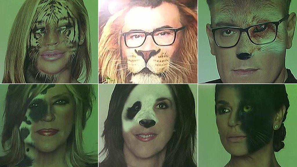 Leones, tigres, pumas, leopardos... La otra cara de los colaboradores