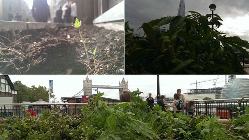 Cannabis en los monumentos emblemáticos de Londres