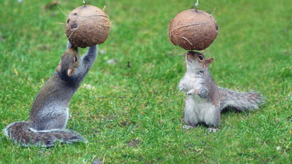 Cocos para almorzar