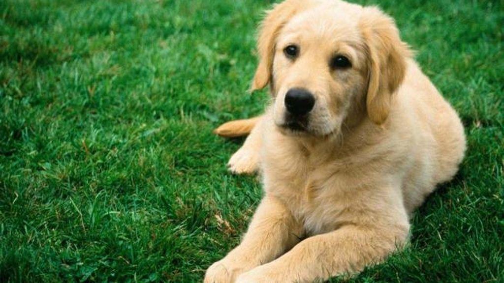¿Qué piensa tu perro?