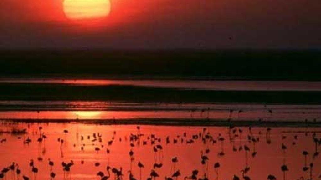 Punto de encuentro de aves migratorias