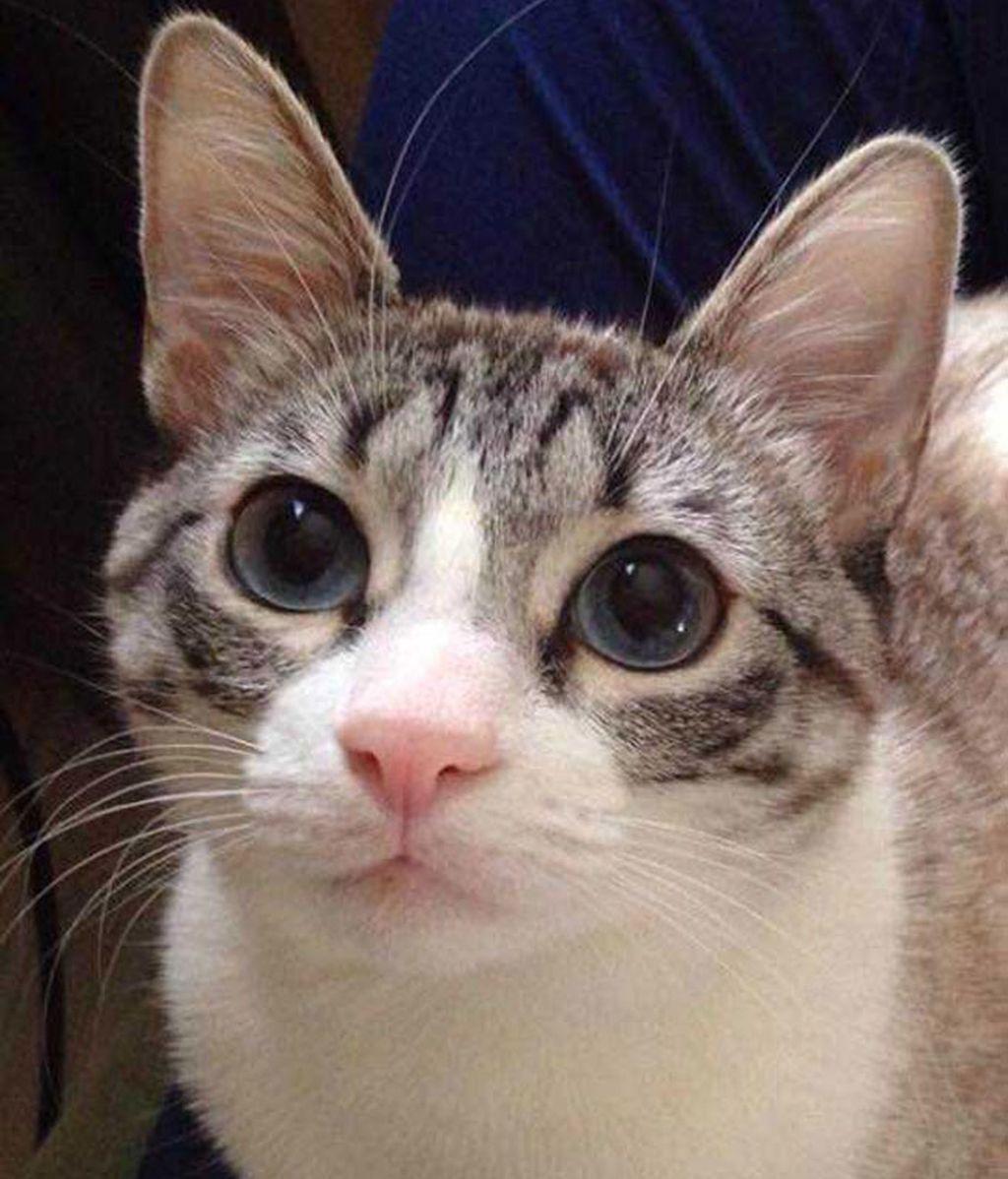 Un gato con dos patas, el rey de Instagram