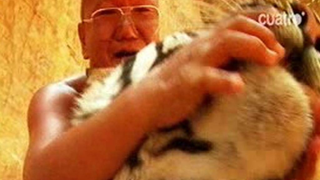 Los monjes y los tigres se llevan muy bien
