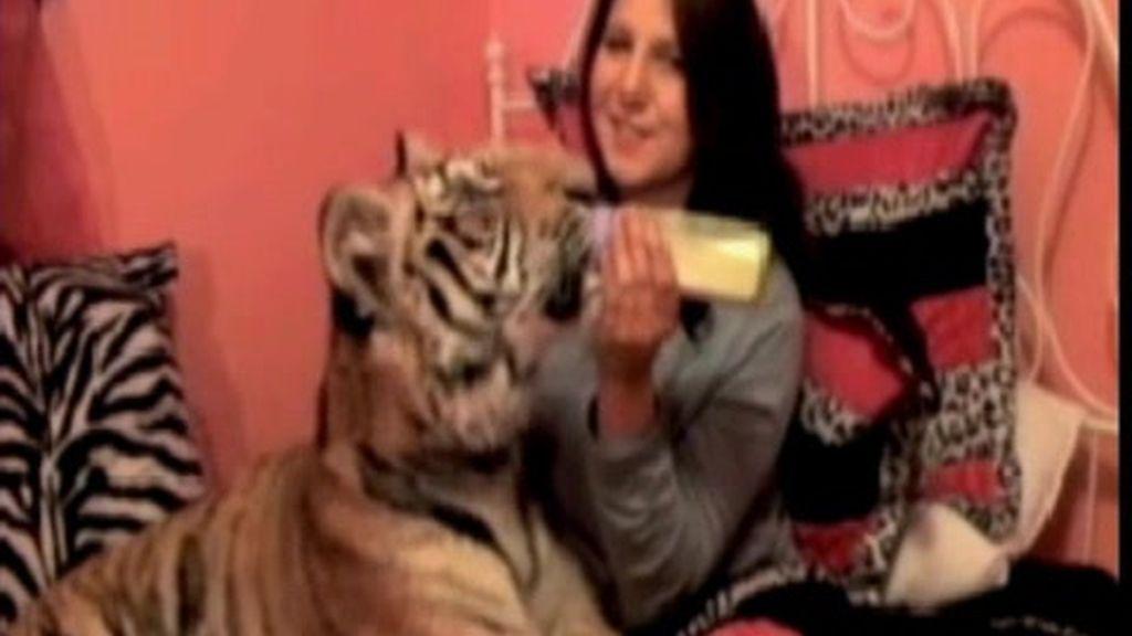 La niña y el tigre