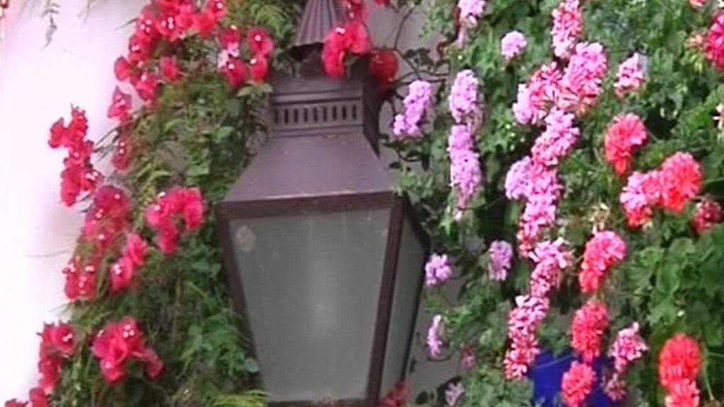 Flores en las casas cordobesas