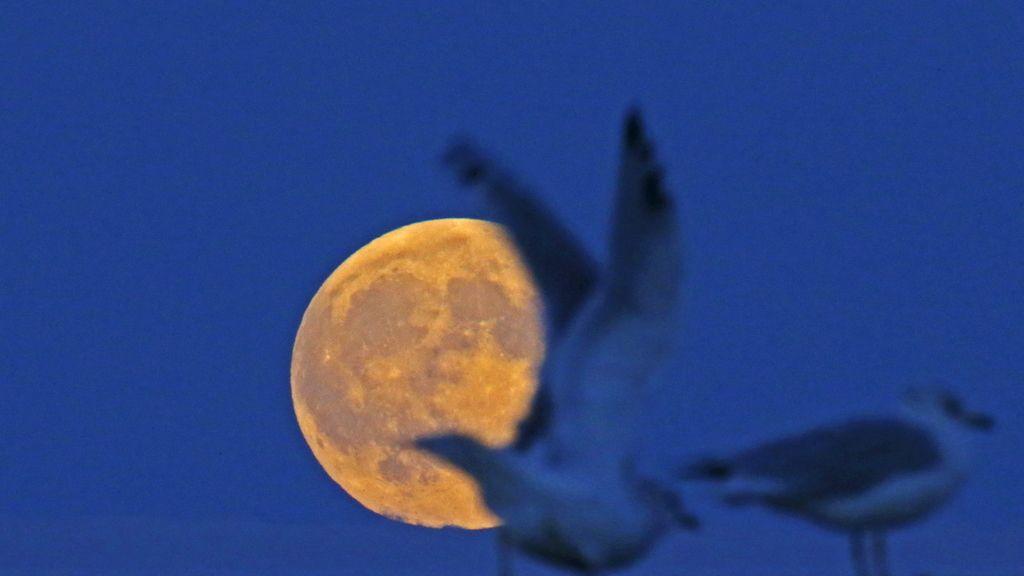 Gaviotas junto a la 'superluna' en Evanston, Illinois