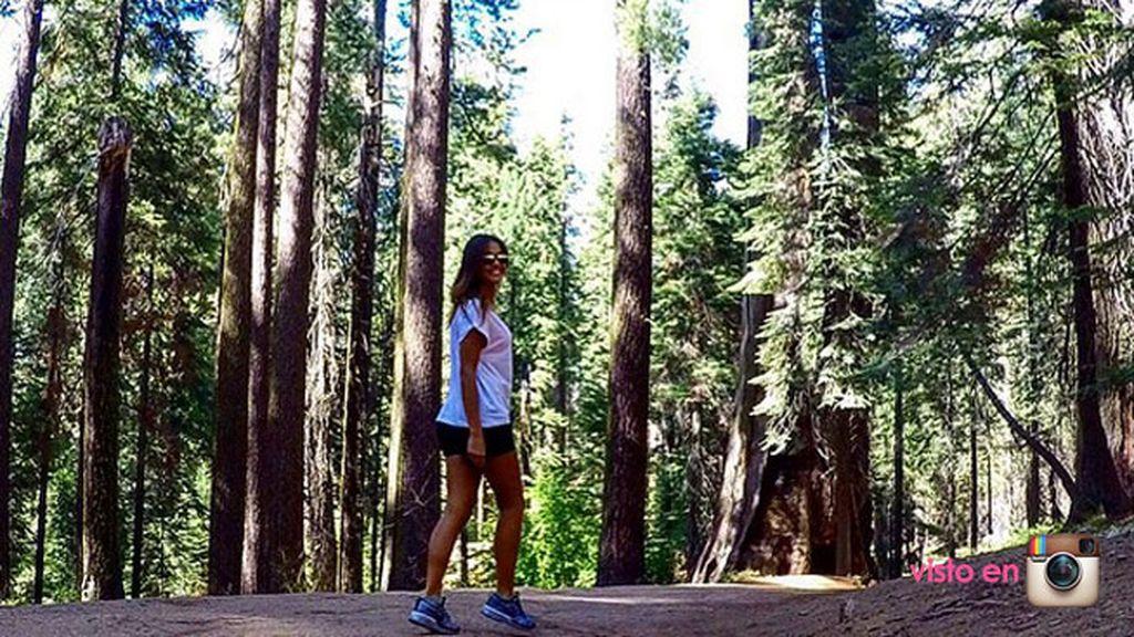 En el bosque estadounidense de Sequoia