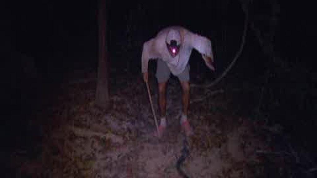 Promo Frank de la jungla: Pitón y Cobra