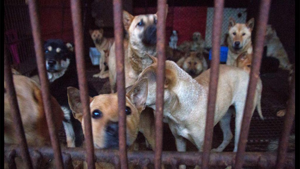 Escalofriantes imágenes provocan el cierre de un matadero clandestino en China