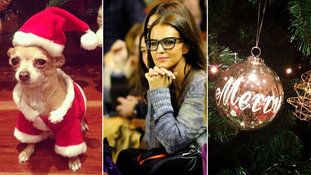 Paula Echevarría decora la casa y viste al perro de Papá Noel