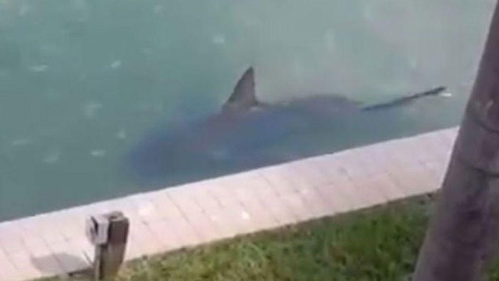 Tiburón en el jardín