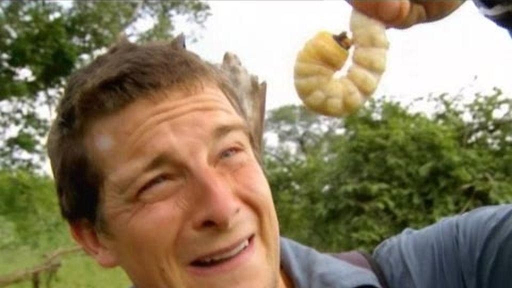 Zambia: la peor comida del último superviviente, larva gigante de escarabajo