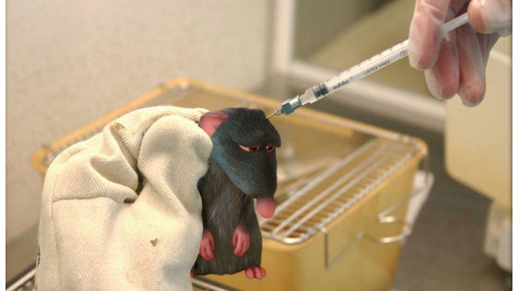 Ratatouille, víctimas de los experimentos