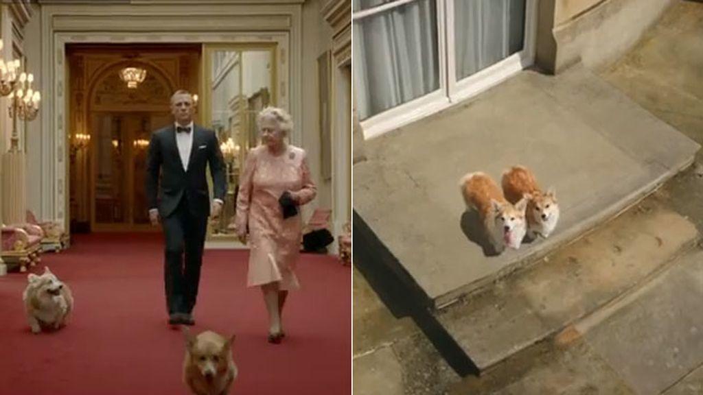 Los perros de la reina Isabel II, protagonistas de un corto junto a Daniel Craig