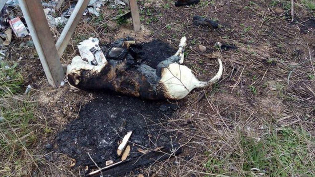 La Guardia Civil pide ayuda para localizar a la persona que quemó a un perro en Puertollano
