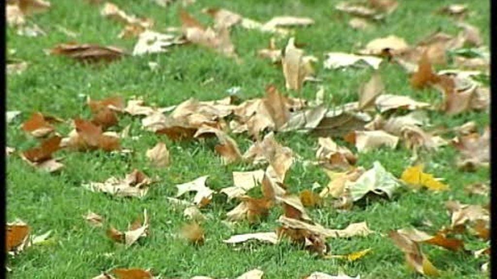 Las hojas se acumulan en las calles de Madrid