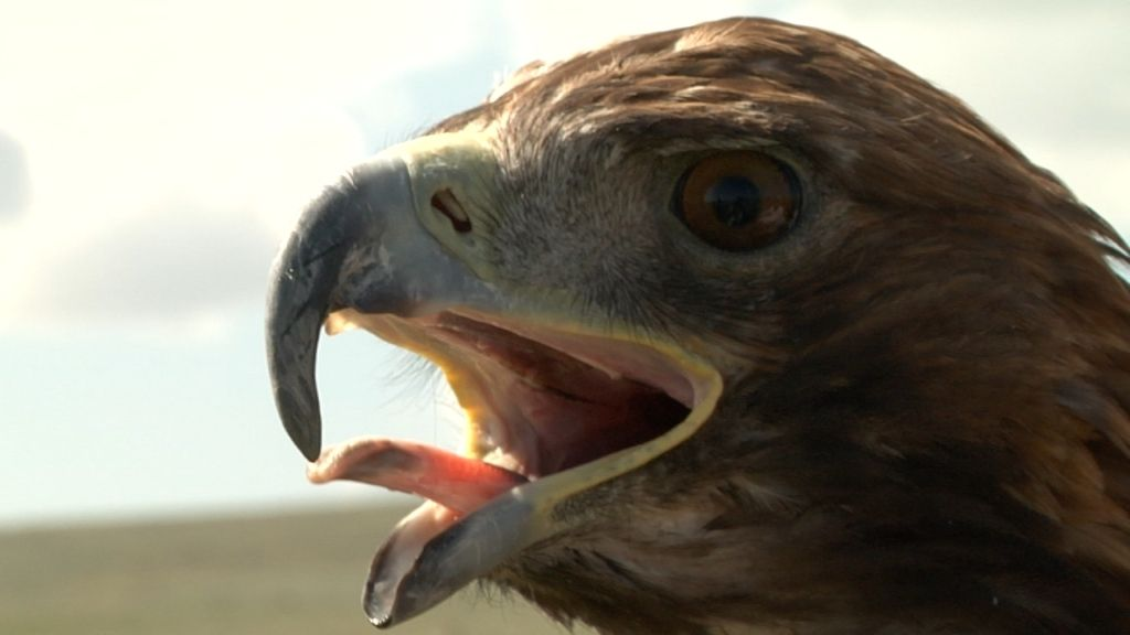 Las mejores fotos de Frank aprendiendo a cazar con águilas