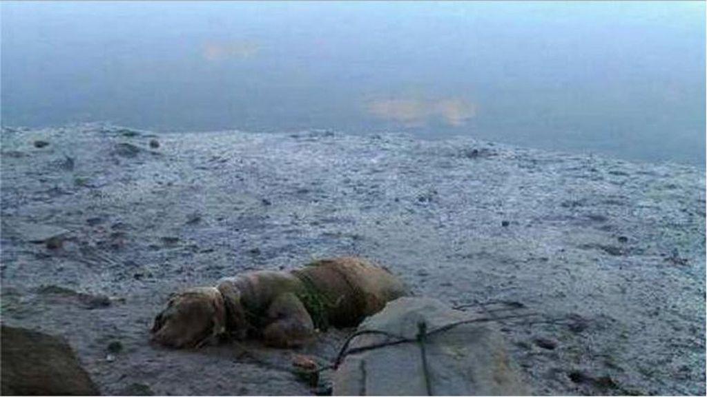 Condenado por atar a un perro a una piedra para que se ahogara en la playa