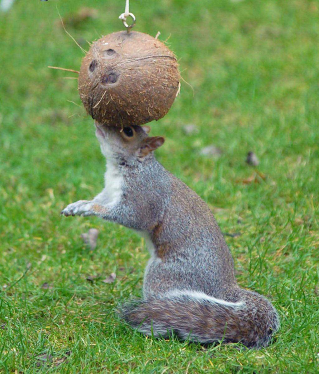 Mordisqueando los cocos