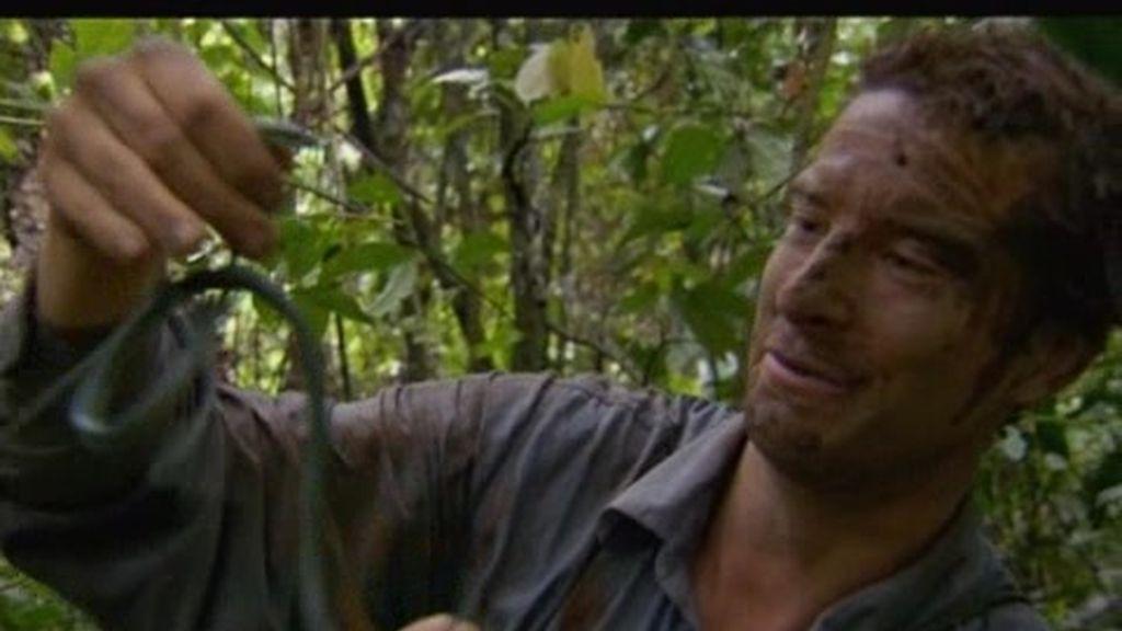 Panamá: ¿Se comerá Bear Grylls una serpiente cruda?