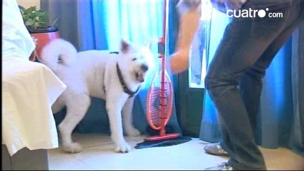 ¿Cómo volver a un perro sumiso?