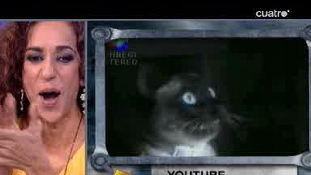 El Hormiguero: Rosario Flores hace bailar a los gatos
