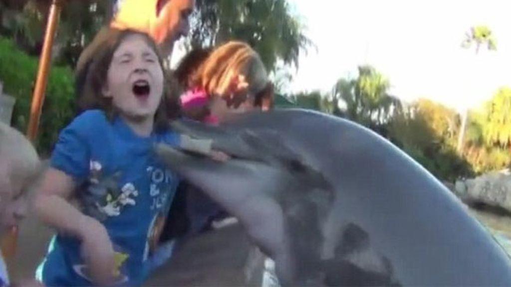 Un delfín muerde a una niña en Florida