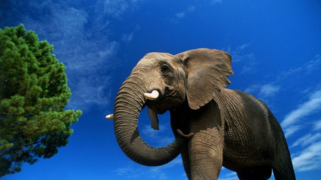 Se queja por ver a un elefante por la ventana en plena sabana africana