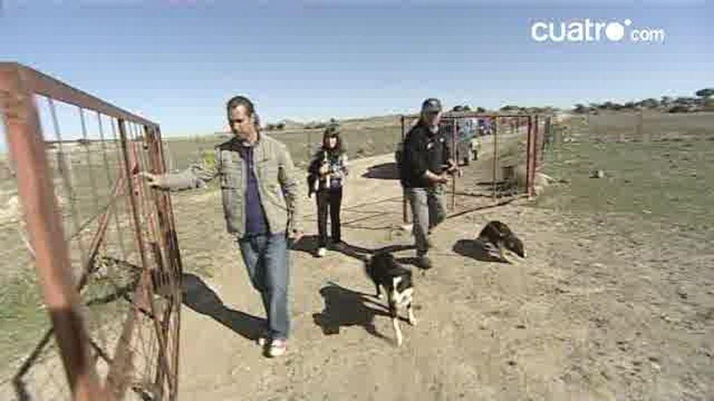Imágenes inéditas: Borja se sorprende ante la obediencia de los perros pastores