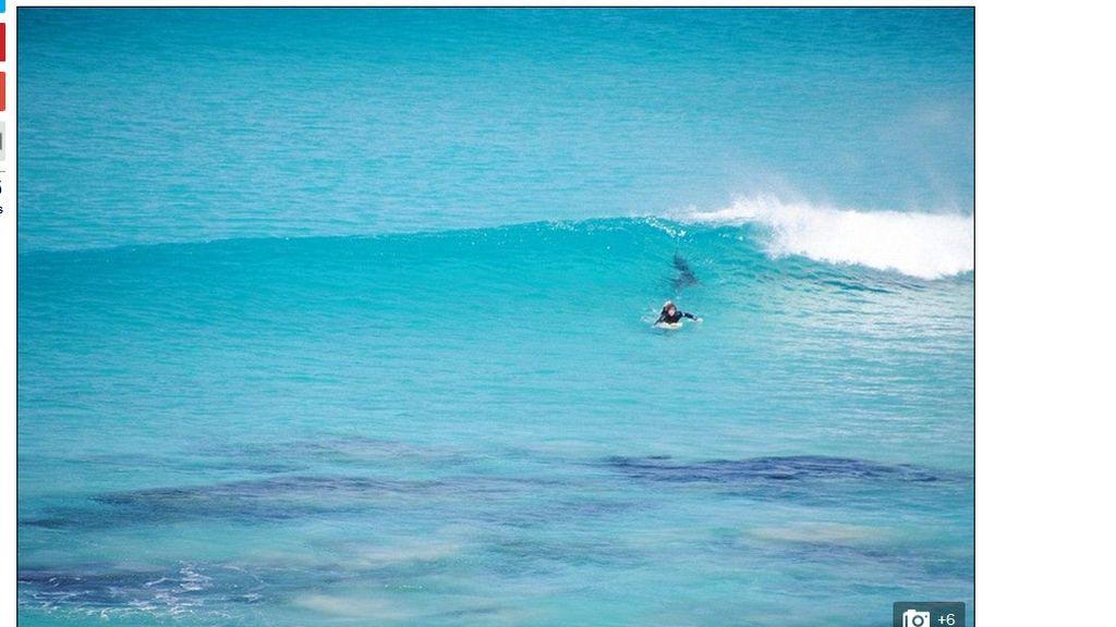 El estremecedor encuentro de un surfista con un tiburón blanco