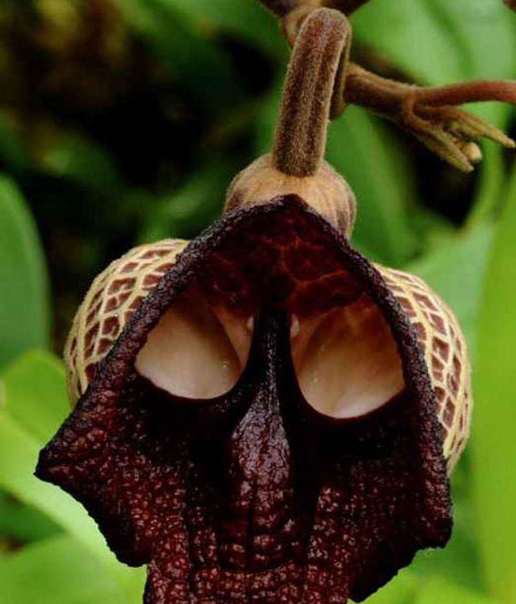 Formas que se esconden en flores