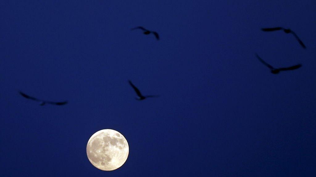 Sombra de pájaros en la 'superluna' vista desde el Cairo, Egipto