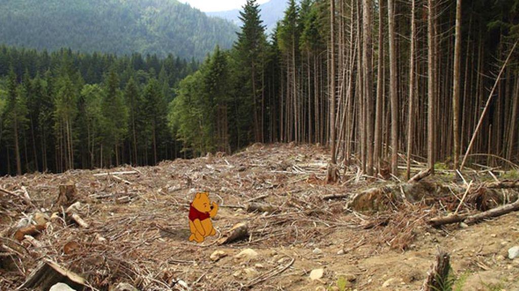 Winnie The Pooh, en el bosque talado