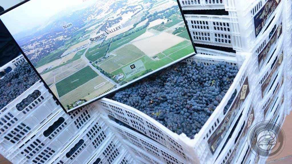 Comienza a hacer vino en su apartamento y termina distribuyendo más de 750 litros año