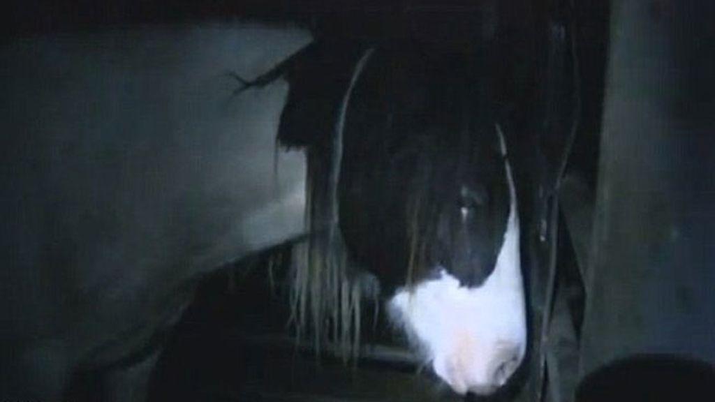 Caballos torturados en Chesire, Londres