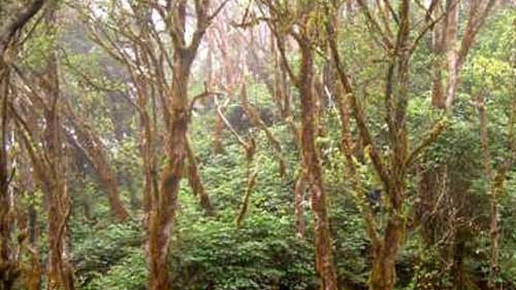Selva subtropical